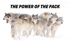 The Power of the Wolfpack